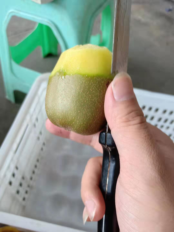 海东哪里有绿色水果