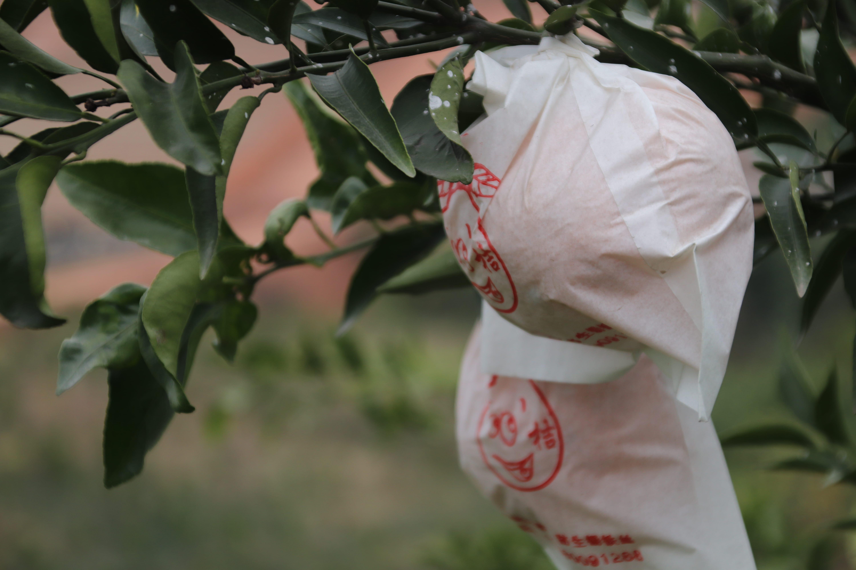 乌鲁木齐哪里有天府生态柑橘怎么样