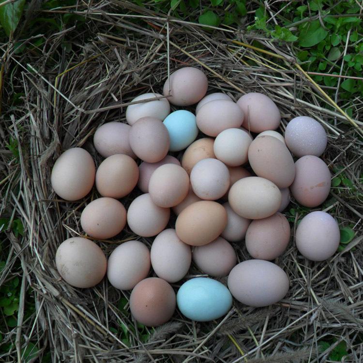 黄山哪里有土鸡蛋推荐