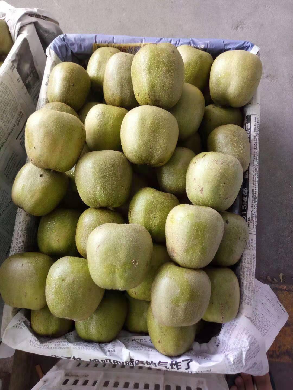 德州正品绿色水果多少钱