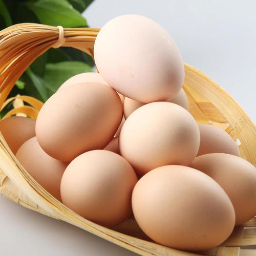 三明优质的土鸡蛋推荐