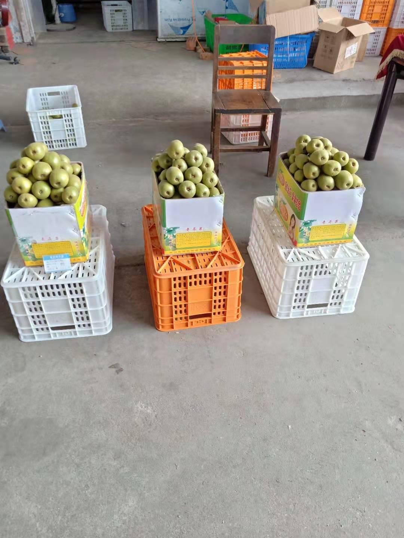 锡林郭勒盟优质的绿色水果在线咨询
