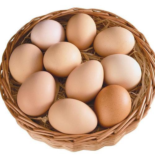 广安优质的土鸡蛋推荐