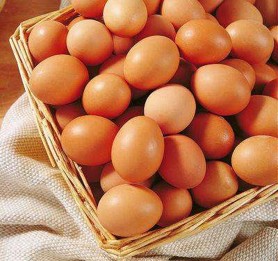 黔西优质的虫子土鸡蛋有哪些品牌
