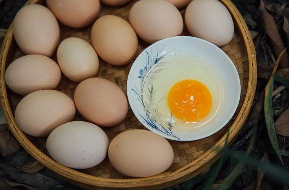 铜川哪里有虫子土鸡蛋报价