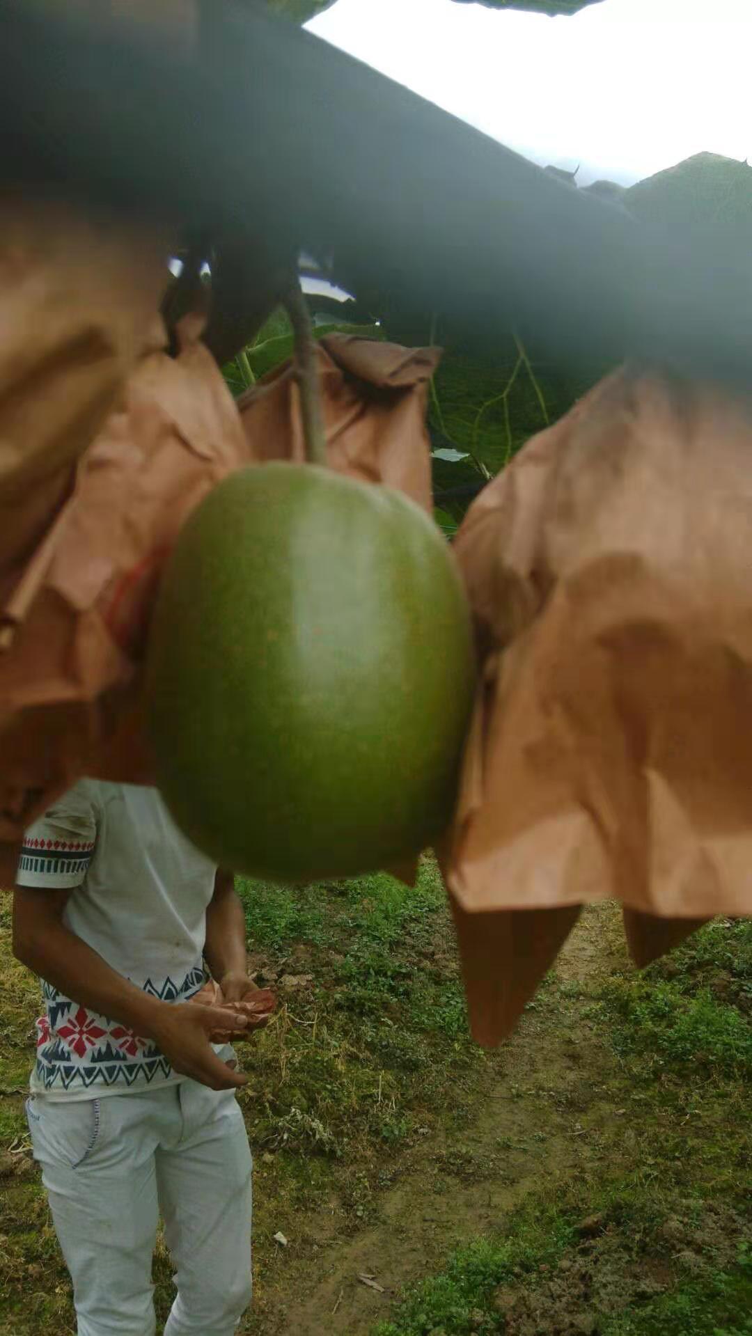 甘肃哪里有绿色水果