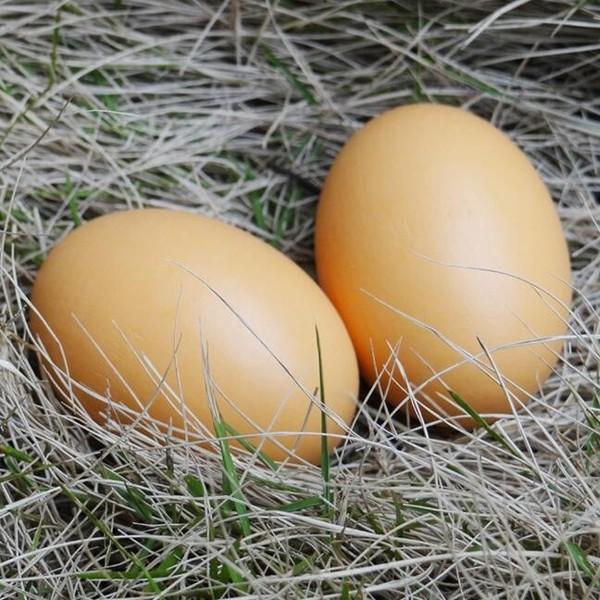 永州哪里有土鸡蛋加工