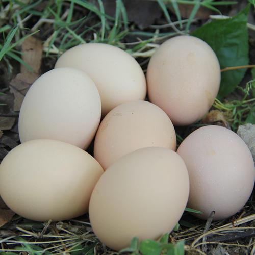 淄博哪里有土鸡蛋加工