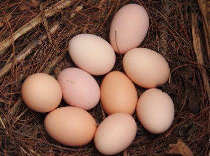 柳州哪里有虫子土鸡蛋报价